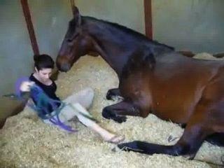 Pferd Porno Videos Liebeaktcom