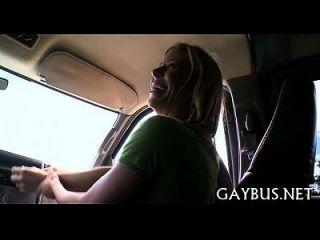 wilde pecker reiten in einem auto