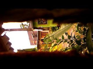 camara oculta capta el culo de una mujer con su novio