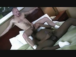 schönen weißen Esel für einen schwarzen Schwanz