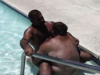Bären im Pool