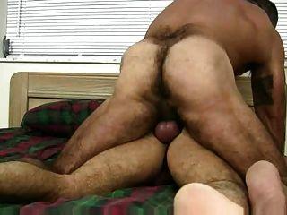 Muskel haarige Bär mit babreback Sex