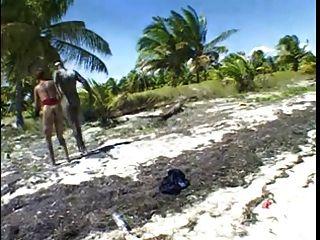 große braune Brustwarzen & großen braunen Schwanz am Strand.