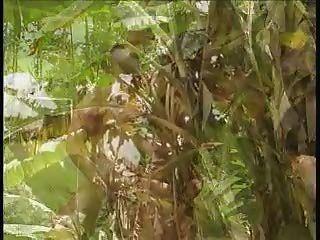 ts Dschungelinsel lovin