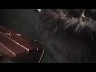 Amateur cd saugen und roh ficken schwarzen Schwanz