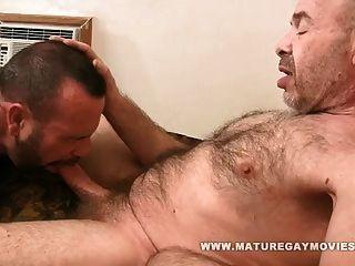 muskulöser Bär gefickt von reifem Freund