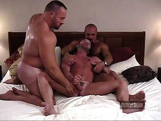 Muskel Bär Hotel