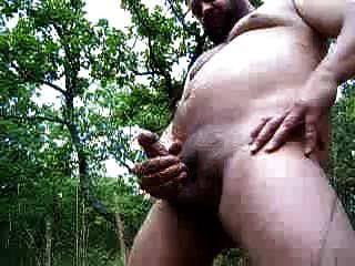 Bärchen in den Wäldern